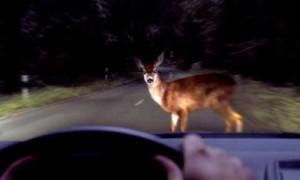 Animales en carretera: frena sin desviarte